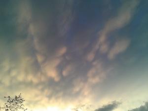 Un ciel pour Shauba